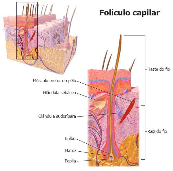 foliculo capilar transplante de cabelo