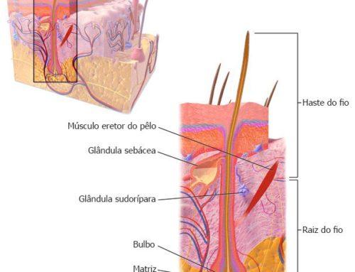 Folículos Capilares, Terminais, Velos e Transplante Capilar